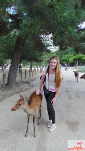 Nara Park, Japan, 2014