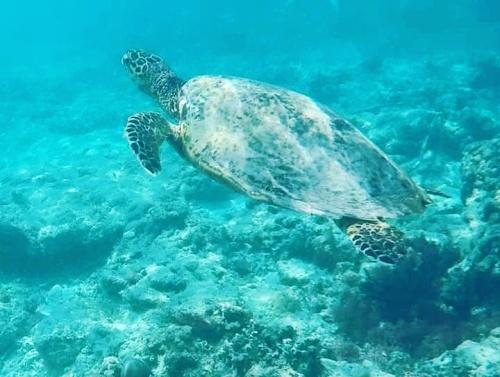 Turtle snorkeling Gili