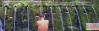 Holy water spring, Bali