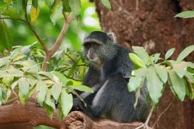©Flickr.com: The Congo Basin