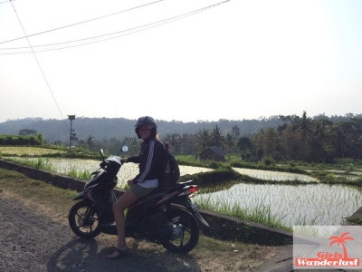 Scooter with rice paddy fields.jpg
