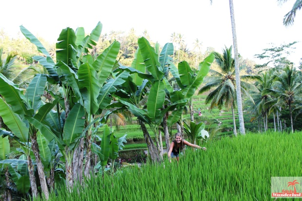 Rice paddy fields. Coverphoto. The Bali Bucket List with 124 things to do! #girlswanderlust #Bali #Indonesia #wanderlust #travel