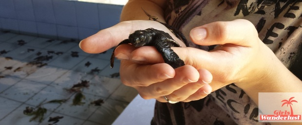 15 Harmful animal tourist attractions to avoid by Girlswanderlust -  Holding sea turtles.jpg