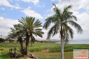 Palmtrees!