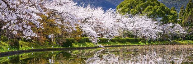 Japan's cherry blossom and other seasons.jpg