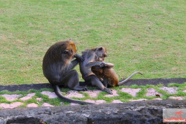 Tips for visiting and surviving the Ubud Monkey Forest in Bali by @girlswanderlust #ubud #monkeyforest #Bali #indonesia #indonesie #monkeys #monkey #travel #wanderlust 2.jpg