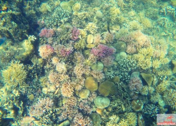 Gili Nanggu, Gili Tangkong, Gili Kedis and Gili Sudak – The paradise islands of Lombok via @Girlswanderlust. Snorkel 6. #girlswanderlust #gili #lombok #indonesia #gilinanggu #nanggu #kedis #sudak.jpg