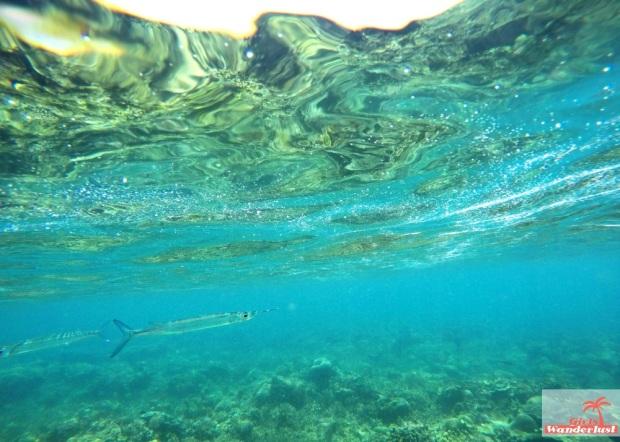 Gili Nanggu, Gili Tangkong, Gili Kedis and Gili Sudak – The paradise islands of Lombok via @Girlswanderlust. Snorkel. #girlswanderlust #gili #lombok #indonesia #gilinanggu #nanggu #kedis #sudak.jpg